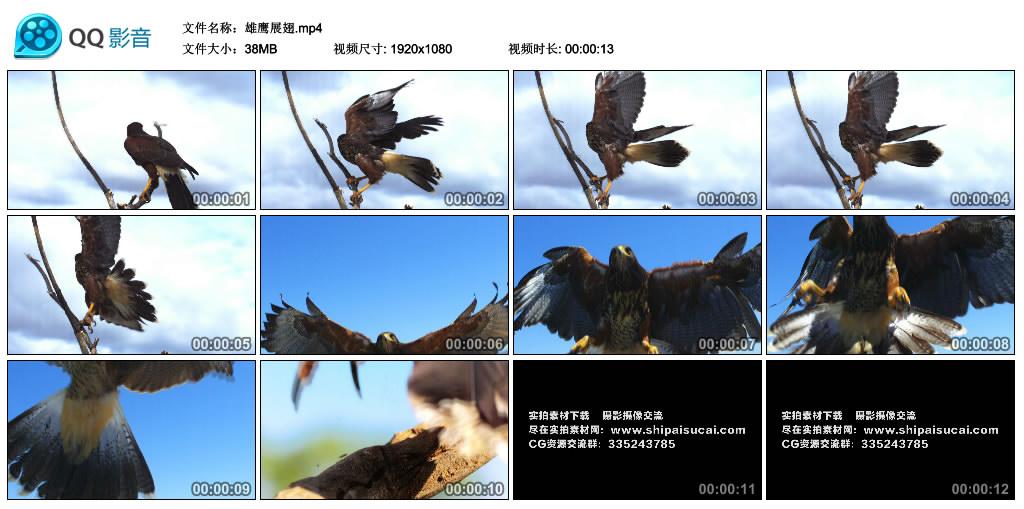 【高清实拍素材】雄鹰展翅 视频素材-第1张