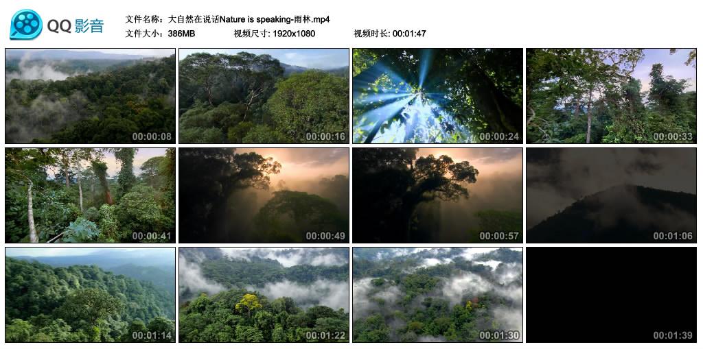 Nature is speaking丨大自然在说话-雨林(高清无水印) 视频素材-第1张