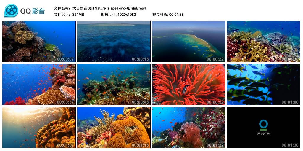 Nature is speaking丨大自然在说话-珊瑚礁(高清无水印) 视频素材-第1张