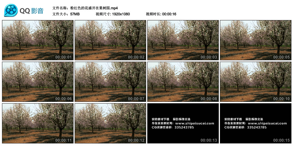 高清实拍视频素材丨粉红色的花盛开在果园 视频素材-第1张
