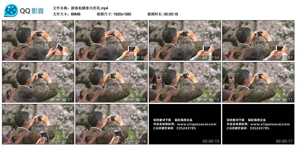 高清实拍视频丨游客拍摄春天的花 视频素材-第1张