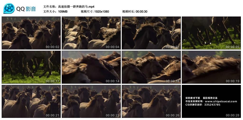 高清实拍视频丨高速拍摄一群奔跑的马 视频素材-第1张