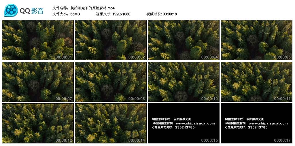 高清实拍视频丨航拍阳光下的原始森林 视频素材-第1张