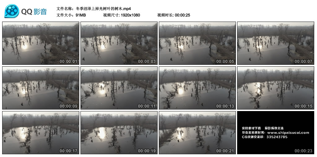 高清实拍视频丨冬季沼泽上掉光树叶的树木 视频素材-第1张