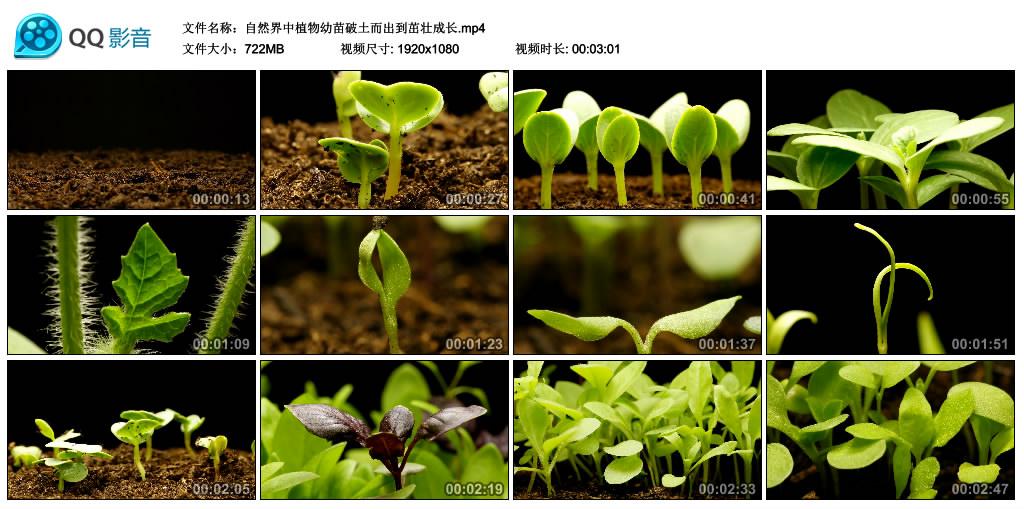 高清实拍视频丨自然界中植物幼苗破土而出到茁壮成长 视频素材-第1张