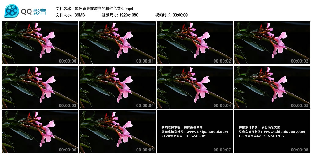 高清实拍视频丨黑色背景前漂亮的粉红色花朵 视频素材-第1张