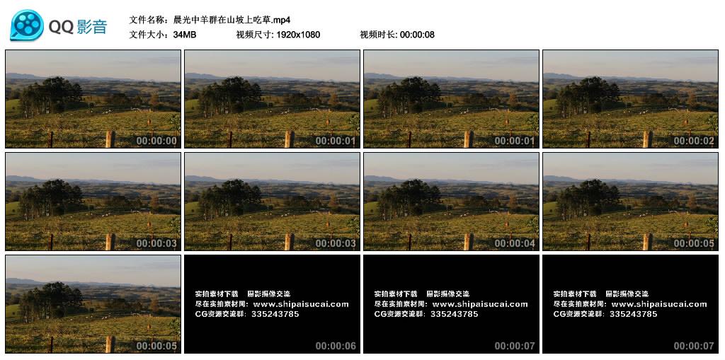 高清实拍视频丨晨光中羊群在山坡上吃草 视频素材-第1张