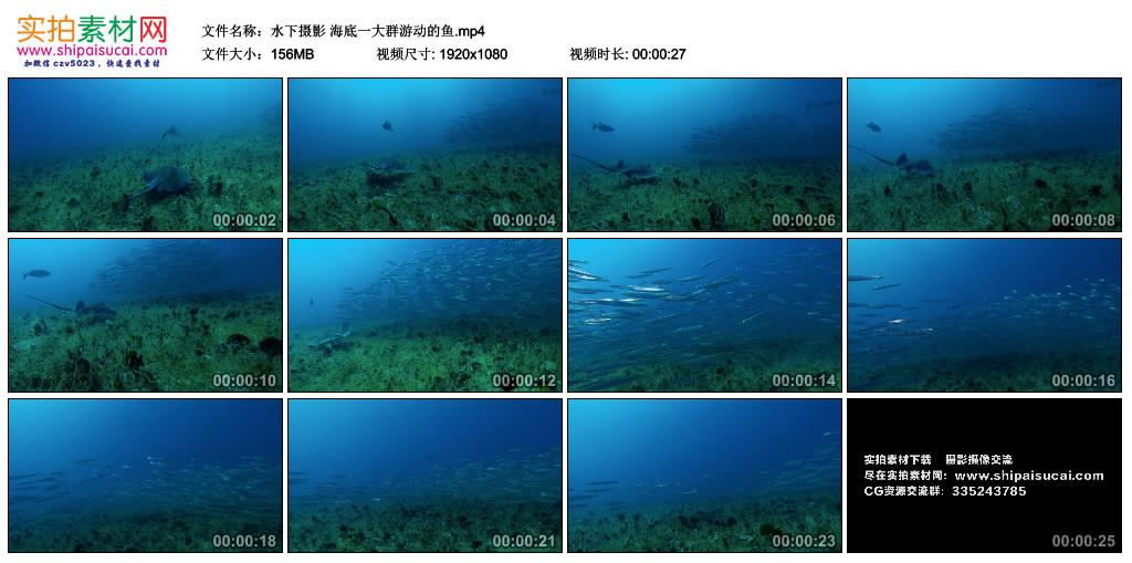 高清实拍视频丨水下摄影 海底一大群游动的鱼 视频素材-第1张