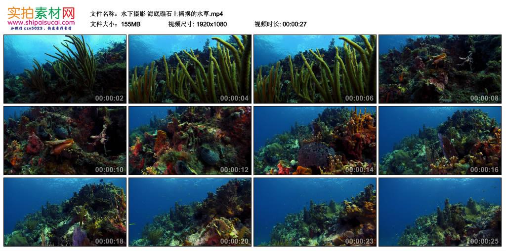 高清实拍视频丨水下摄影 海底礁石上摇摆的水草 视频素材-第1张