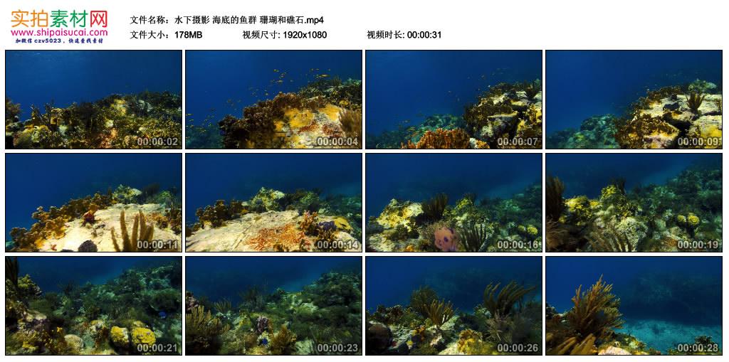 高清实拍视频丨水下摄影 海底的鱼群 珊瑚和礁石 视频素材-第1张