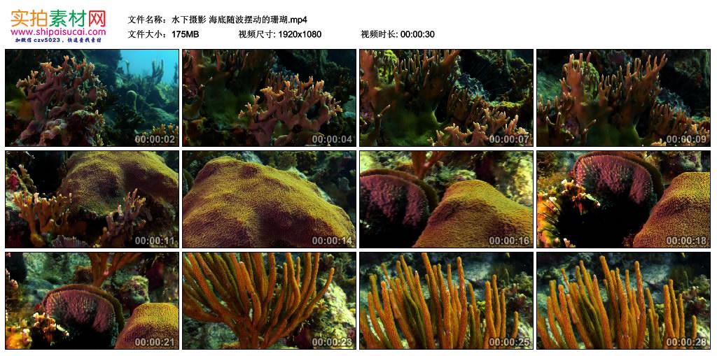 高清实拍视频丨水下摄影 海底随波摆动的珊瑚 视频素材-第1张