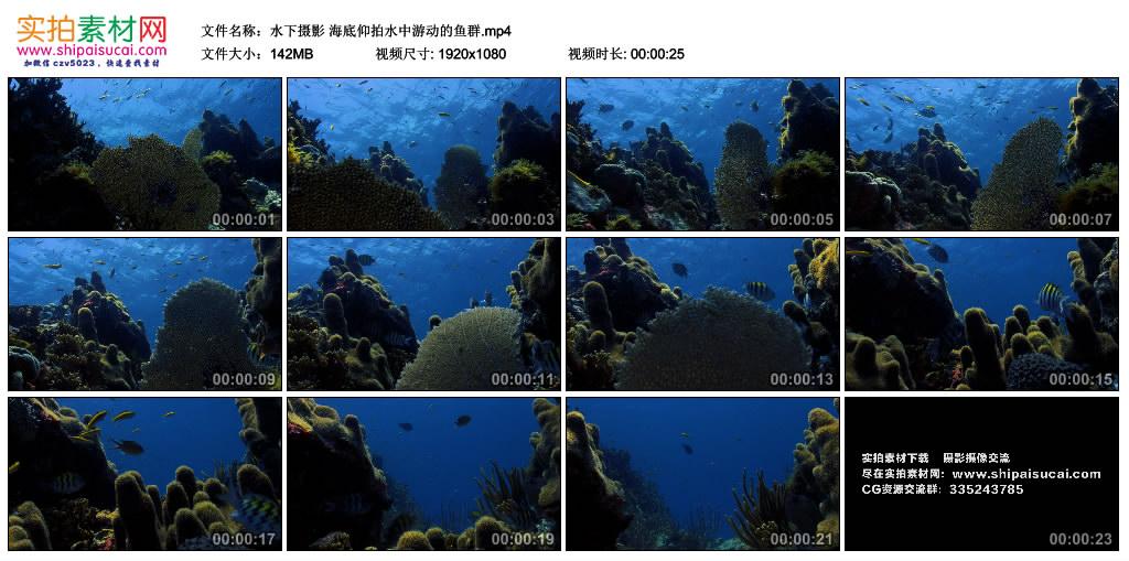 高清实拍视频丨水下摄影 海底仰拍水中游动的鱼群 视频素材-第1张