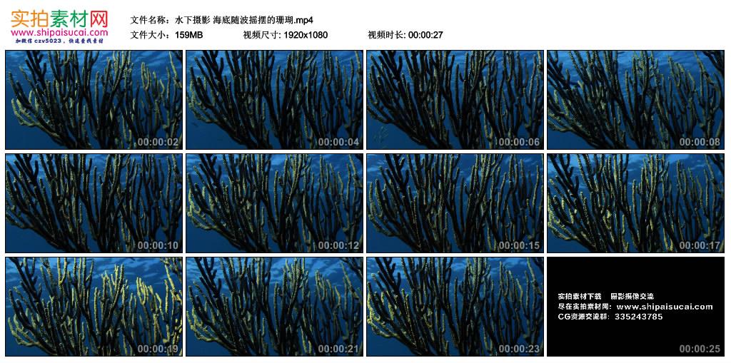 高清实拍视频丨水下摄影 海底随波摇摆的珊瑚 视频素材-第1张