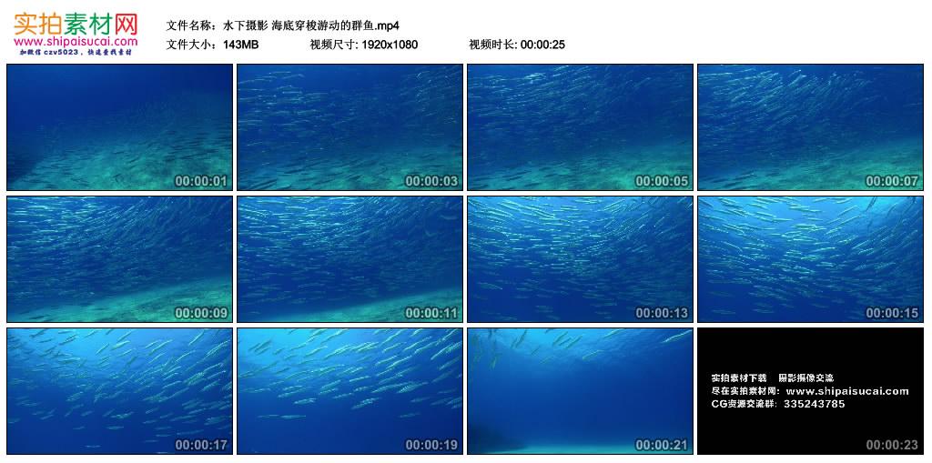 高清实拍视频丨水下摄影 海底穿梭游动的群鱼 视频素材-第1张