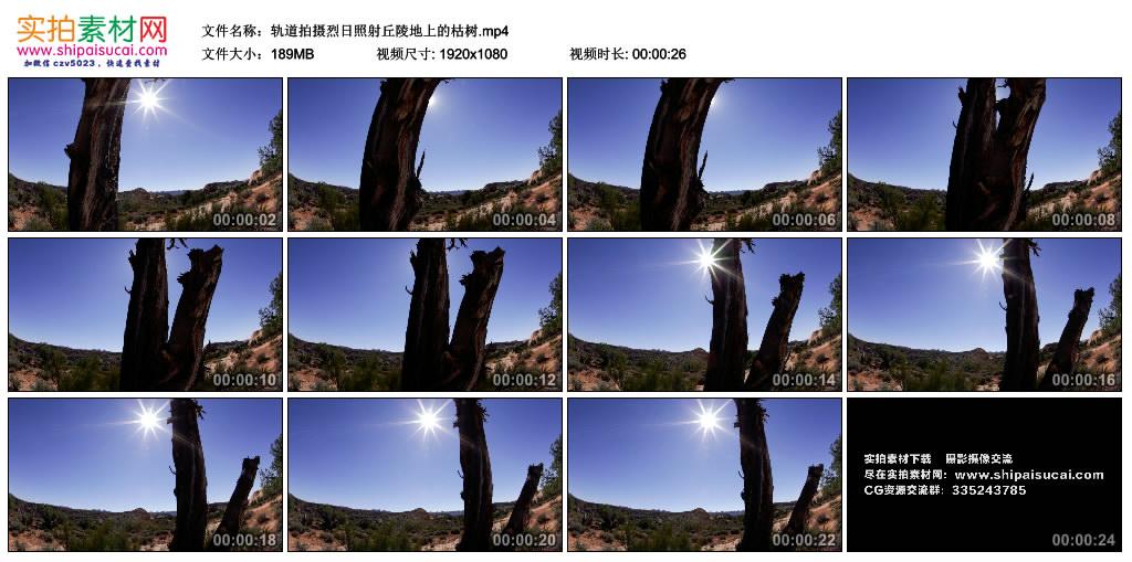 高清实拍视频丨轨道拍摄烈日照射丘陵地上的枯树 视频素材-第1张