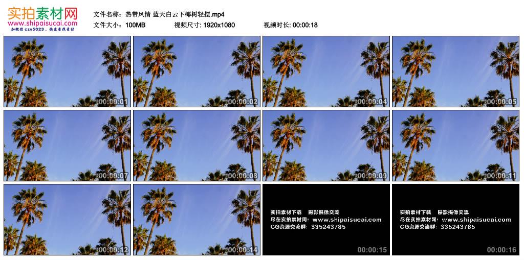 高清实拍视频丨热带风情 蓝天白云下椰树轻摆 视频素材-第1张