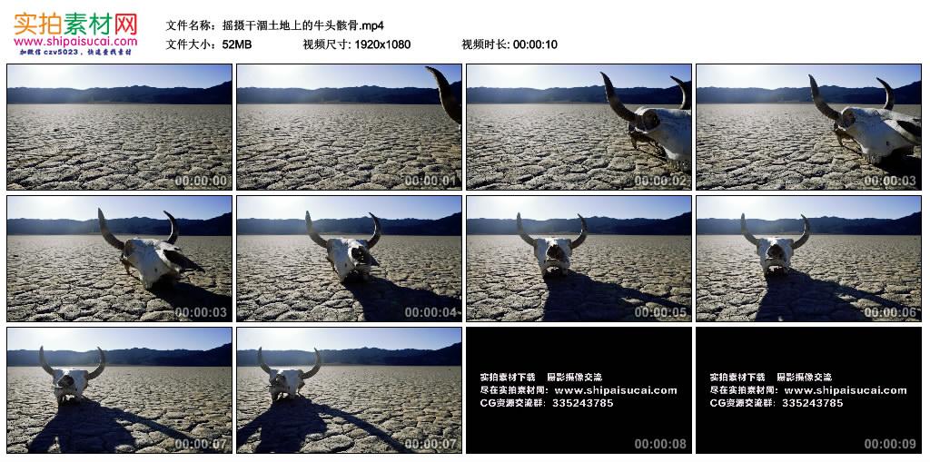 高清实拍视频丨摇摄干涸土地上的牛头骸骨 视频素材-第1张