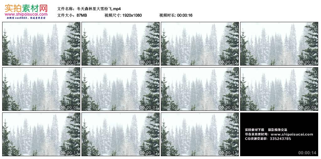 高清实拍视频丨冬天森林里大雪纷飞 视频素材-第1张