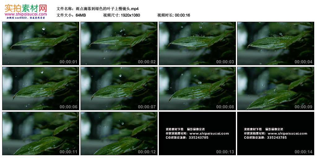 高清实拍视频丨雨点滴落到绿色的叶子上慢镜头 视频素材-第1张