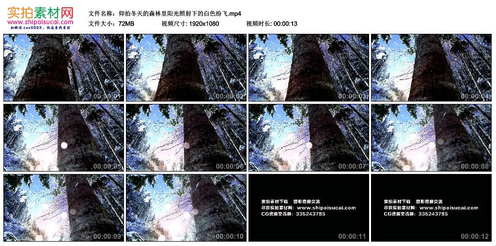 高清实拍视频丨仰拍冬天的森林里阳光照射下的白雪纷飞 视频素材-第1张
