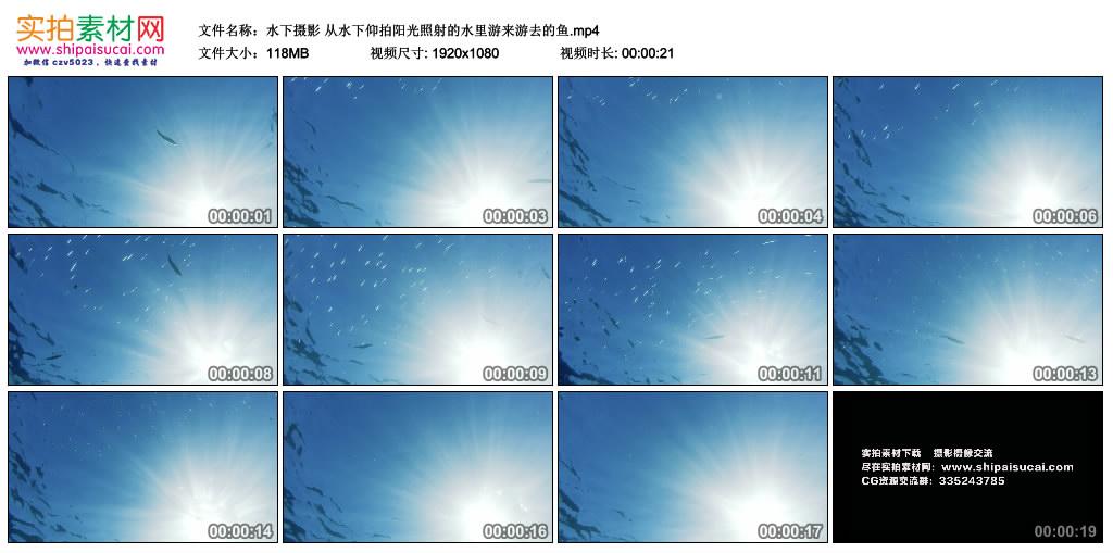 高清实拍视频丨水下摄影 从水下仰拍阳光照射的水里游来游去的鱼 视频素材-第1张