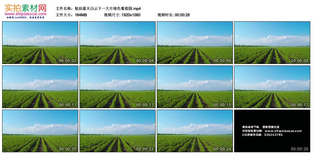 高清实拍视频丨航拍蓝天白云下一大片绿色葡萄园 视频素材-第1张