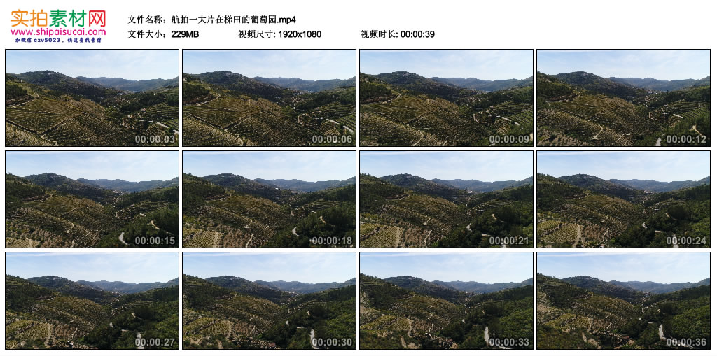 高清实拍视频丨航拍一大片在梯田的葡萄园 视频素材-第1张