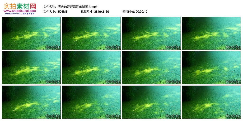 4k实拍视频素材丨青色的浮萍漂浮在湖面上