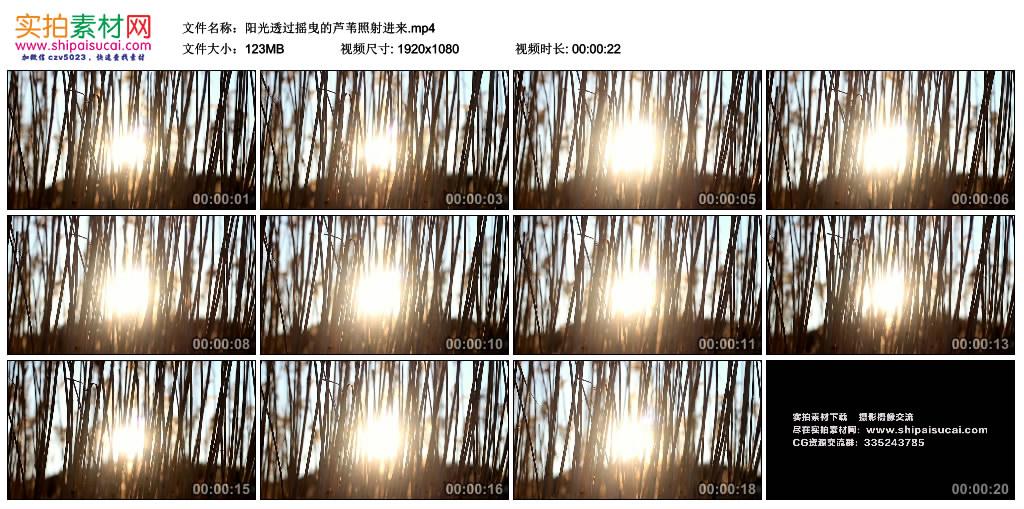 高清实拍视频素材丨阳光透过摇曳的芦苇照射进来 视频素材-第1张