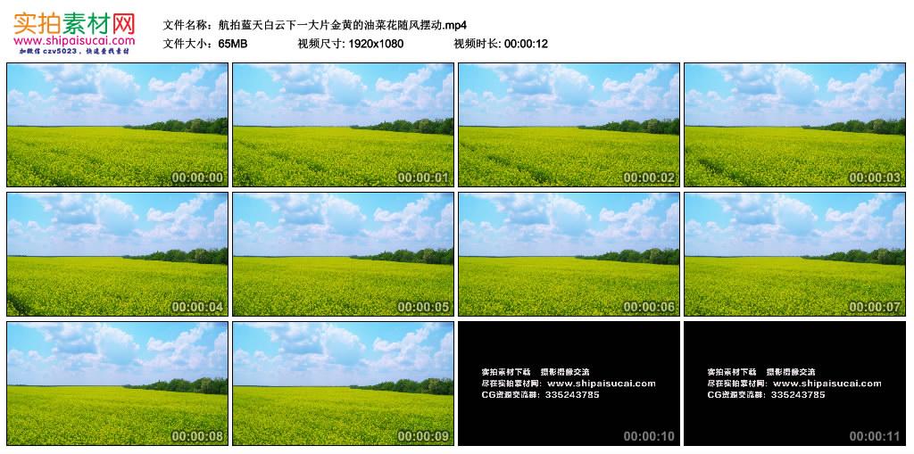 高清实拍视频素材丨航拍蓝天白云下一大片金黄的油菜花随风摆动 视频素材-第1张