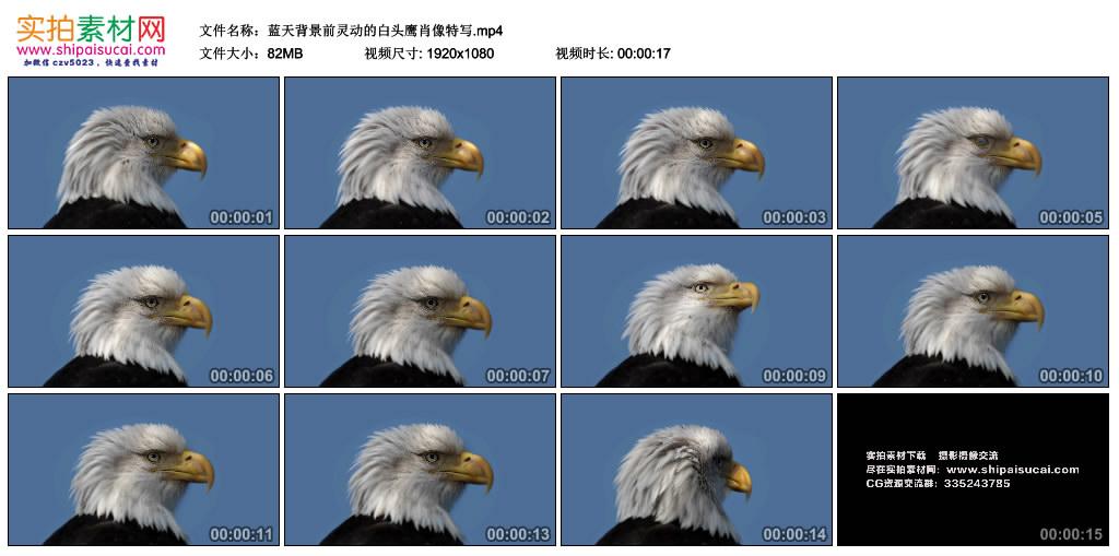 高清实拍视频素材丨蓝天背景前灵动的白头鹰肖像特写 视频素材-第1张