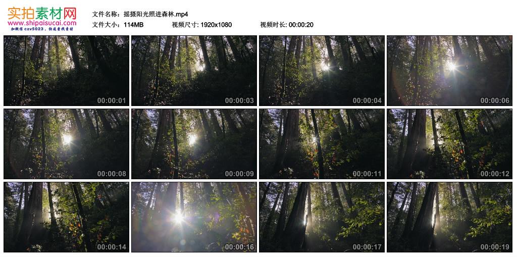 高清实拍视频素材丨摇摄阳光照进茂密的森林 视频素材-第1张