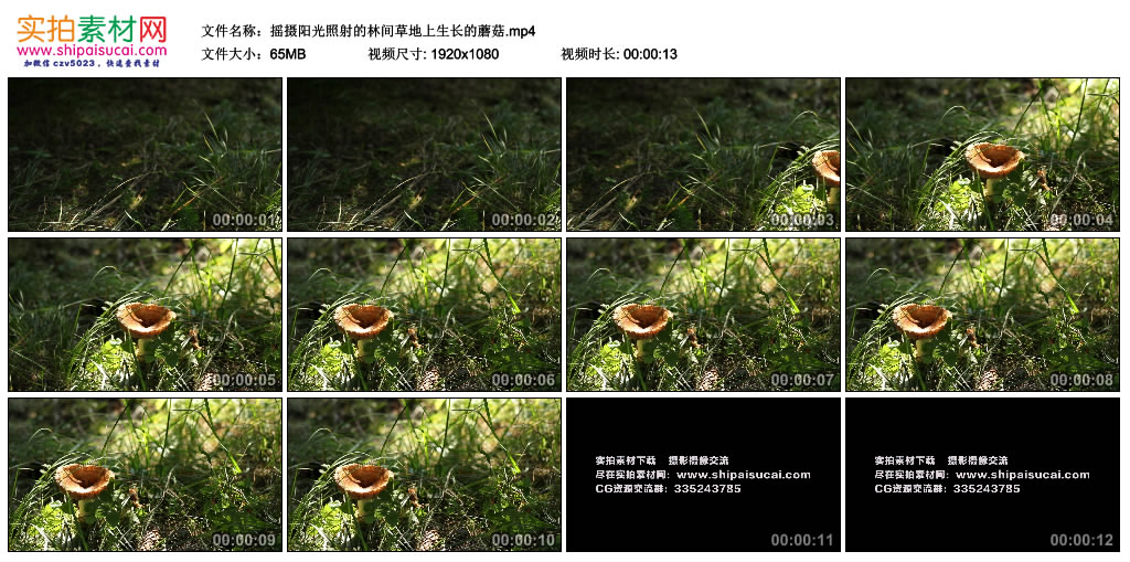 高清实拍视频素材丨摇摄阳光照射的林间草地上生长的蘑菇 视频素材-第1张