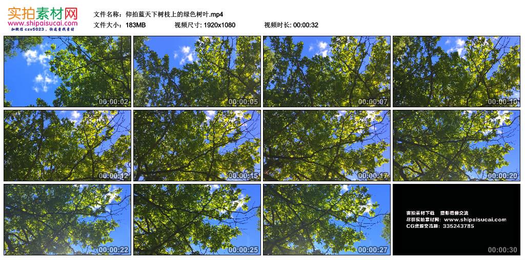 高清实拍视频素材丨仰拍蓝天下树枝上的绿色树叶 视频素材-第1张