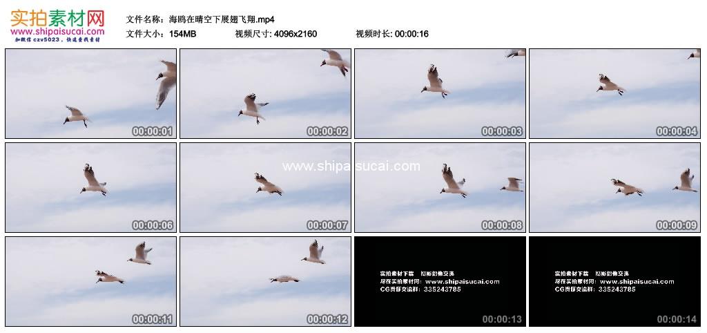 4K实拍视频素材丨海鸥在晴空下展翅飞翔 4K视频-第1张