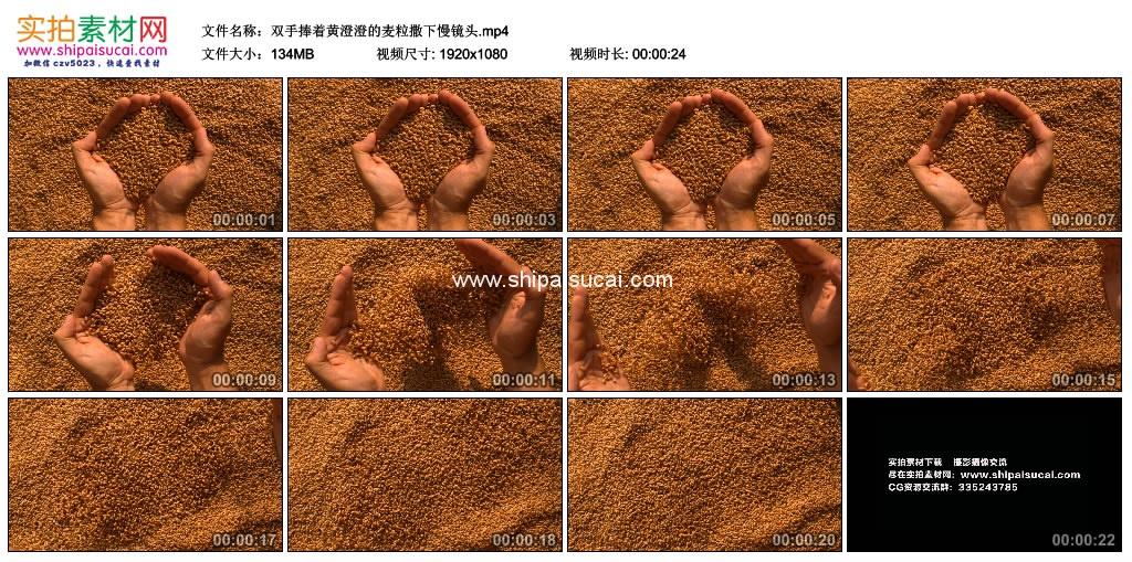 高清实拍视频素材丨双手捧着黄澄澄的麦粒撒下慢镜头 视频素材-第1张
