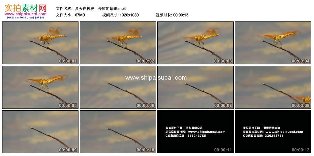 高清实拍视频素材丨夏天在树枝上停留的蜻蜓 视频素材-第1张