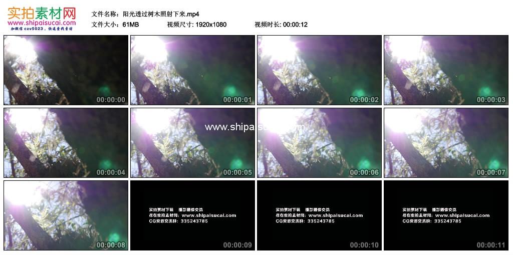 高清实拍视频素材丨阳光透过树木照射下来 视频素材-第1张