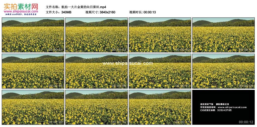 4K实拍视频素材丨航拍一大片金黄色的向日葵田 4K视频-第1张