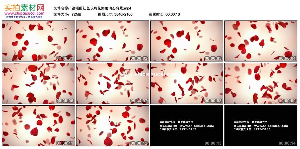 4k实拍视频素材丨浪漫的红色玫瑰花瓣雨动态背景