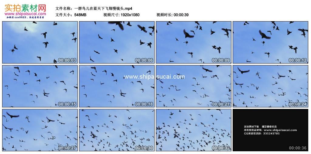 高清实拍视频素材丨一群鸟儿在蓝天下飞翔慢镜头 视频素材-第1张