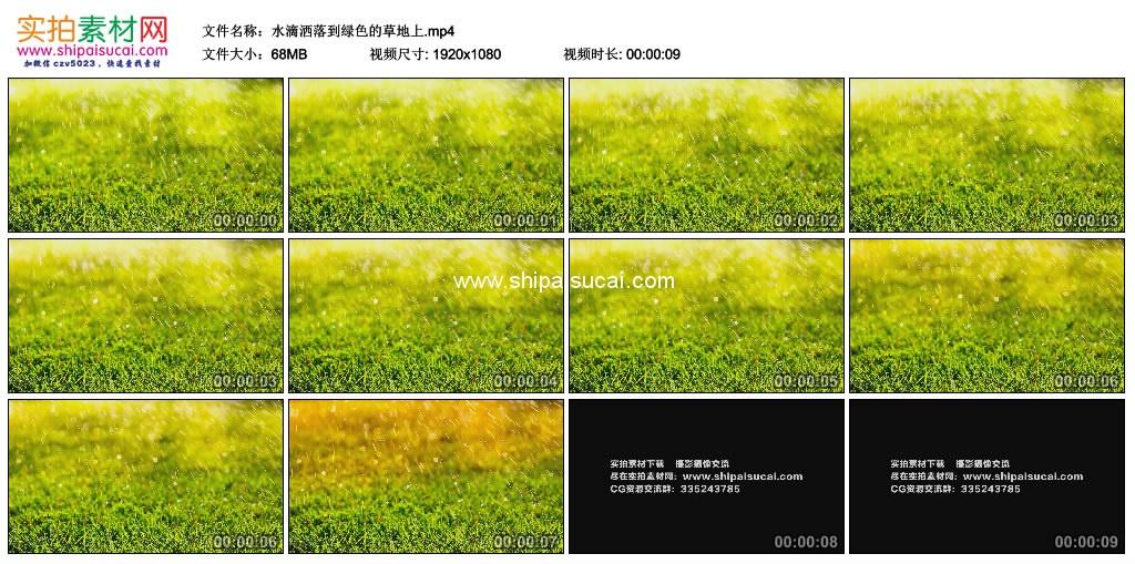高清实拍视频素材丨水滴洒落到绿色的草地上 视频素材-第1张