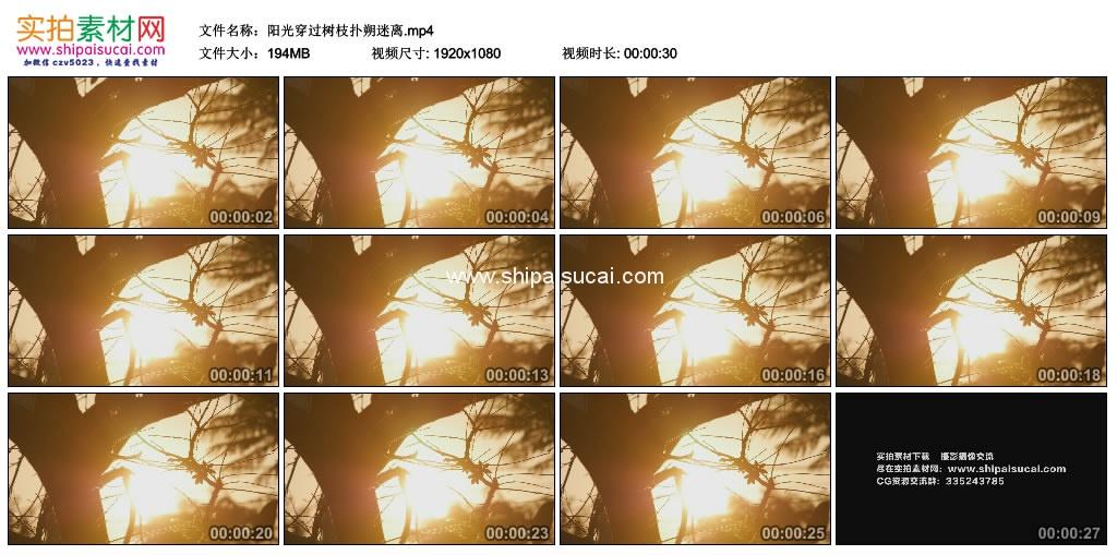 高清实拍视频素材丨阳光穿过树枝扑朔迷离 视频素材-第1张