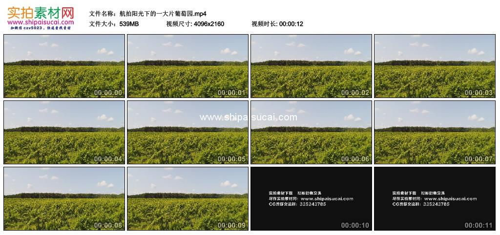 4K实拍视频素材丨航拍阳光下的一大片葡萄园 4K视频-第1张