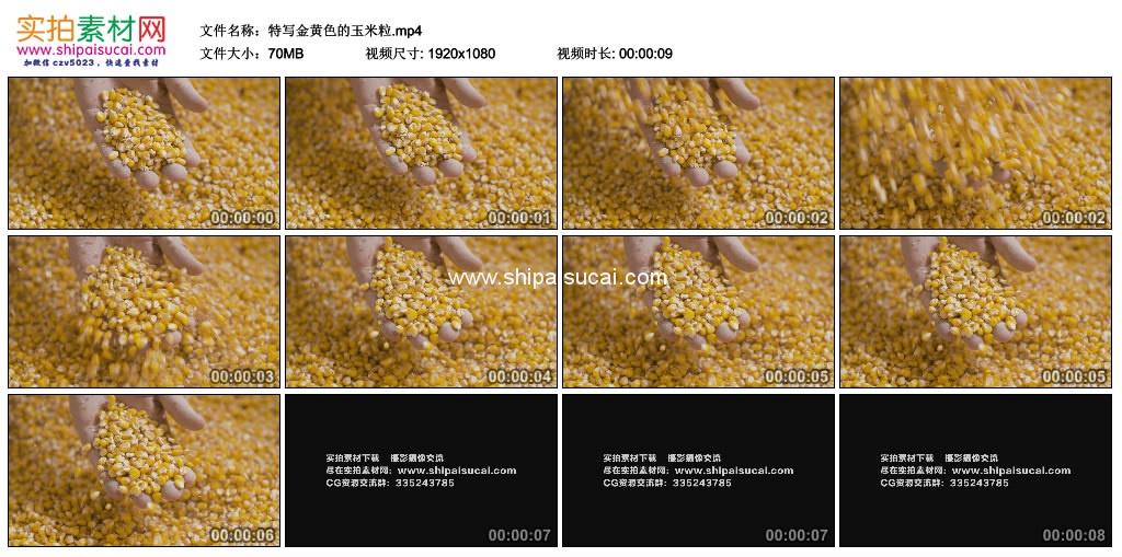 高清实拍视频素材丨特写金黄色的玉米粒 视频素材-第1张