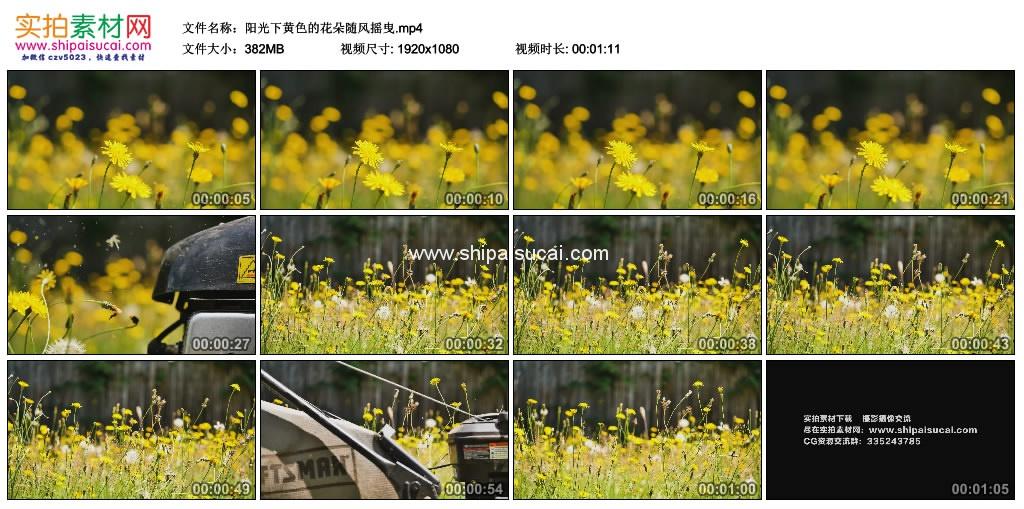 高清实拍视频素材丨阳光下黄色的花朵随风摇曳 视频素材-第1张