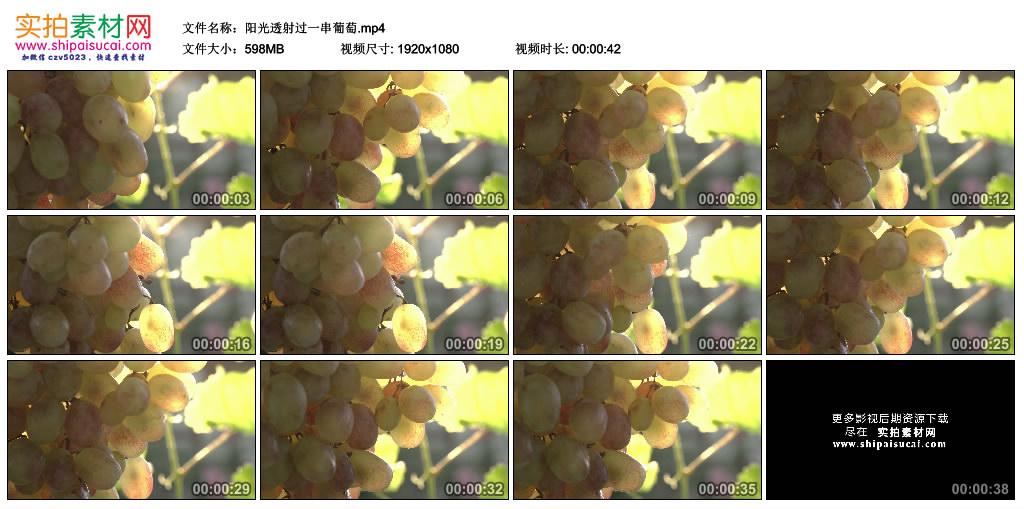 高清实拍视频素材丨阳光透射过一串葡萄 视频素材-第1张