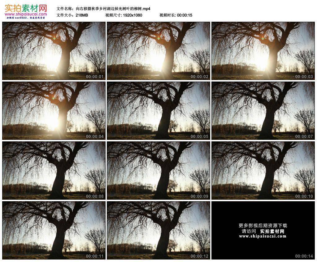 高清实拍视频素材丨向右移摄秋季乡村湖边掉光树叶的柳树 视频素材-第1张