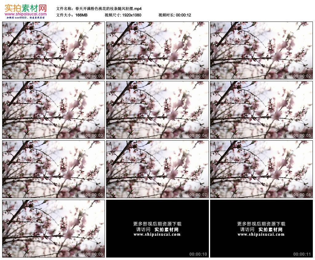 高清实拍视频素材丨春天开满粉色桃花的枝条随风轻摆 视频素材-第1张
