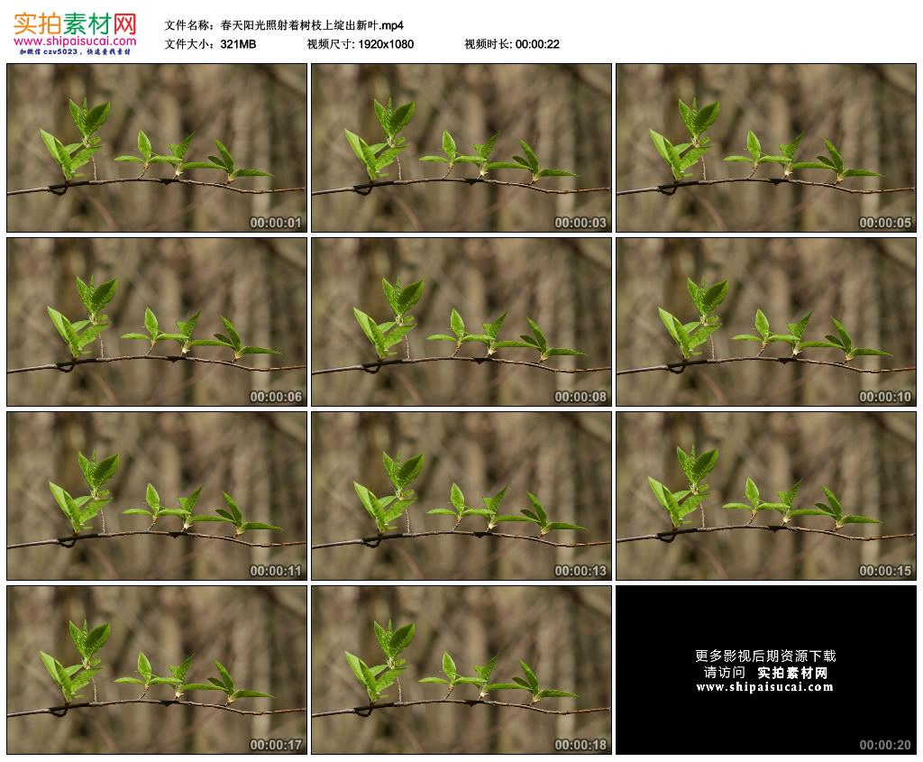 高清实拍视频素材丨春天阳光照射着树枝上绽出新叶 视频素材-第1张